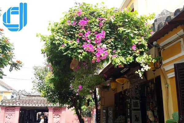 Tour du lịch Sơn La đi Đà Nẵng Huế 4 ngày 3 đêm giá rẻ | D2tour